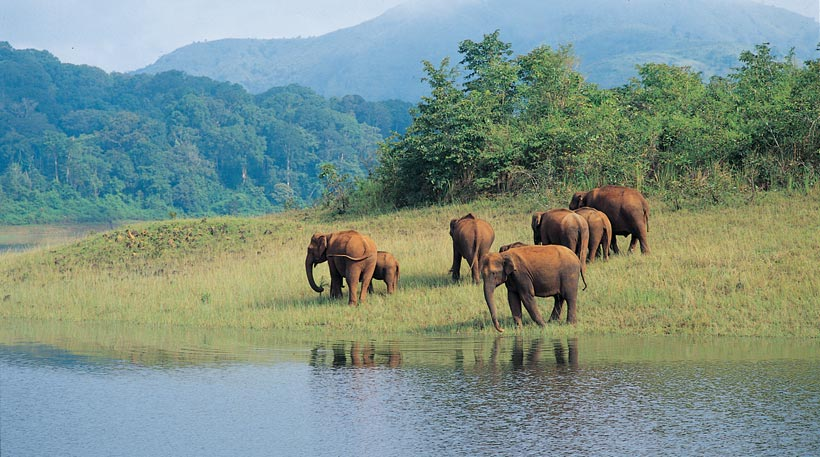 Wildlife in Odisha and Special Tour Packages