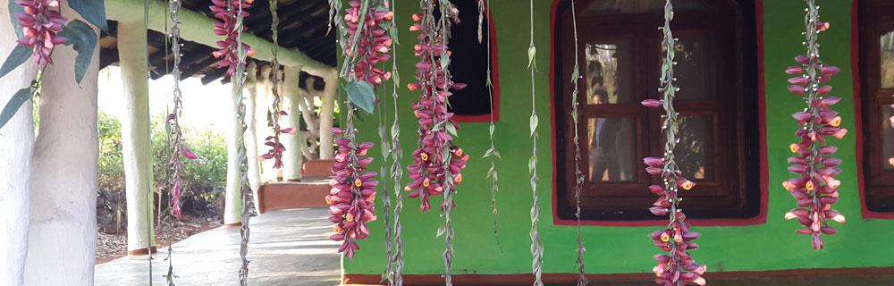 accommodation-in-odisha